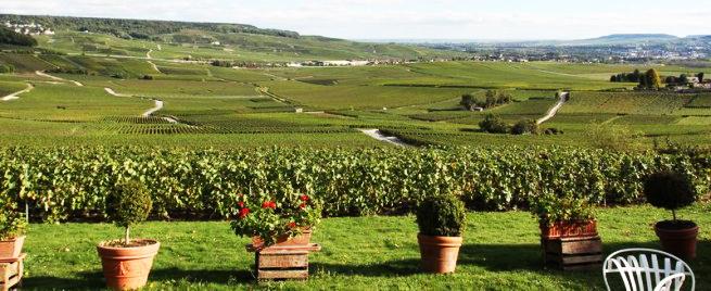 Les Romains plantèrent les premières vignes en région Champagne-Ardenne.